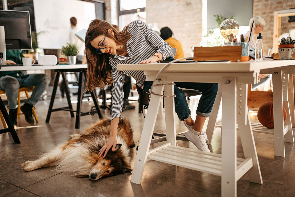 How to Have a Company Pet (And Still Be Productive)