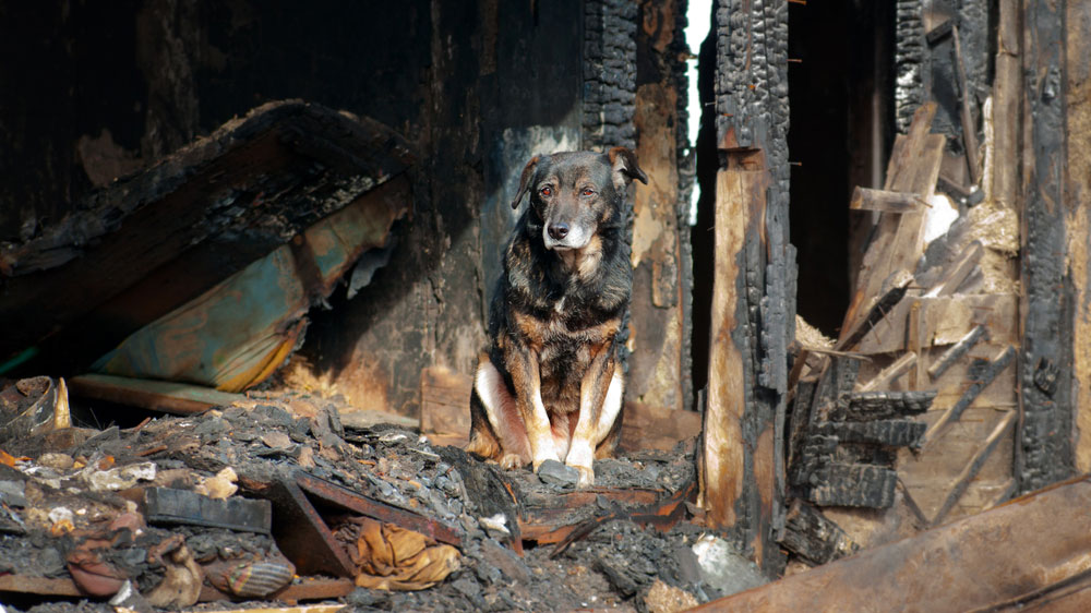 Will Your Pets Be Protected When Disaster Strikes?